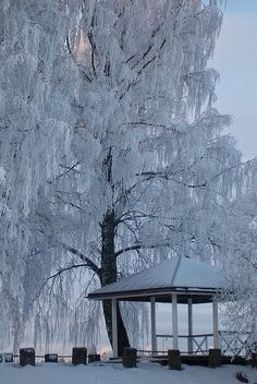 Weeping Willow, absolutely stunning! Would love to come across something like this!
