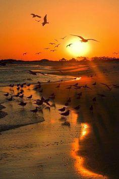El corazón es un camino. Arenas vibrantes lo hacen sendero, hacia el cielo, regaz o de ternura y de consue...