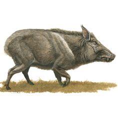 Animals of Ashfall Extinct Animals, Prehistoric Creatures, Fossils, Geology, Mammals, North America, Beast, Moose Art, Paleo