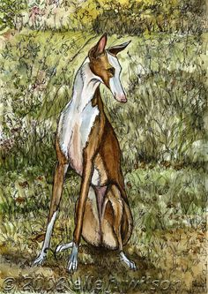 A Little Enchanting  Ibizan Hound Art Dog Print by AlmostAnAngel66, £15.00