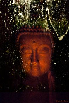 """""""Happiness and unhappiness are not primarily created by the material world or the physical body. First and foremost, they are decisions of the mind."""" By AlicePopkorn Title: Dream of the Buddha ~ Mingyur Rinpoche ..*"""