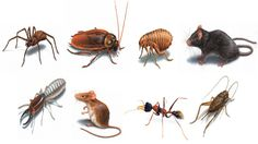#Rodent_control_Chilliwack Expert staff for remove pest from your workshop http://www.holeymoley.ca/