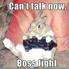 Gamer bun is busy now! #bunny #bunnies #rabbit #pets #cuteanimals