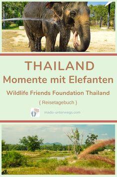 Bei der Wildlife Friends Foundation Thailand (#wfft) erlebte ich einen besonderen Tag mit #elefanten 🐘 und anderen geretteten Tieren 🐒 🐻 🐦 🐢. Und einen absoluten #gänsehautmoment ✨.⠀⠀⠀⠀⠀⠀⠀⠀⠀  // #madoreisen #madounterwegs👣 #reisetagebuch #asien #thailand #reisetipp #travel #tourismthailand // Werbung, da Firmen-/Marken-/Ort-/Personen-Nennung oder -Verlinkung ohne Auftrag, aber als persönliche Empfehlung // Dienstleistungen/Produkte/Unterkünfte selbst bezahlt // Thailand, Wildlife, Elephant, Friends, Animals, Travel Scrapbook, Elephants, Travel Advice, Advertising