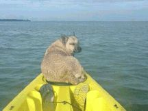 My Dog Loves My New Fishing Kayak From Sun Dolphin And Tsc