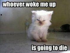"""""""Whoever woke me up is going to die"""" little cat who is grumpy, sleeping cat meme"""