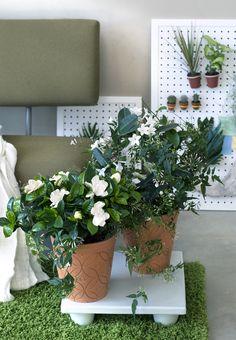 Pflanzen mit weißen Blüten als Blickfang im Bodenbereich – Pflanzenfreude.de
