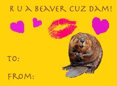 Are you a beaver cuz dam!