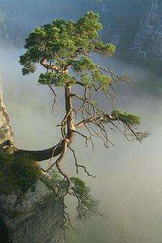 """""""Los paisajes son estados del alma"""" (Amiel)."""