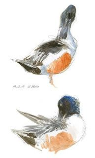 Tim Wootton Wildlife Art: Drawing & Painting Birds – New Book Release
