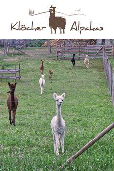 Kangaroo, Wildlife, Animals, Outdoor, Air Travel, Alpacas, Hiking Trails, Family Activity Holidays, Travel Inspiration
