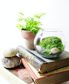 Add stones, twigs, moss or other natural elements to create interest in your terrarium.