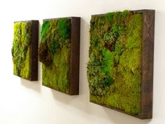 Moss Walls: The Newest Trend In Biophilic Interiors Inhabitat - Sustainable Design Innovation, Eco Architecture, Green Building Moss Wall Art, Moss Art, Green Interior Design, Interior Design Kitchen, Nachhaltiges Design, Design Trends, Milan Design, Design Blogs, Deco Nature