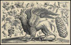 Animalium, ferarum et bestiarum - Griffin -1663 | Flickr - Photo Sharing!