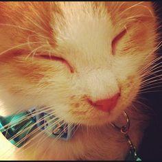 Nacho sleeping ^__^   #cat