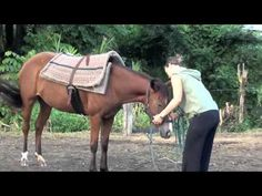 I love this method , this is how my horses are trained