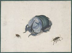 Studies of a Blue Beetle and Insects  Anonymous, Dutch, 17th century