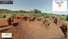 Kenya's flora and fauna gets another slot in Google's apps, weeks into Nairobi's topsy turvy traffic system being digitized on Google maps, another feature has now been released. This new feature will likely boost Kenya's famous tourism sector especially now that the country is experiencing a high turn out of foreign guests like President Obama who visited in July 2015. Elephants and other famous animals will also be supported due to this worthy project. Africa...