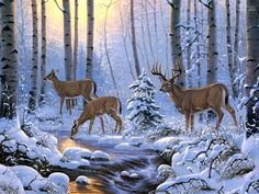 snow in the woods - Google Search
