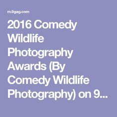 2016 Comedy Wildlife Photography Awards (By Comedy Wildlife Photography) on 9GAG