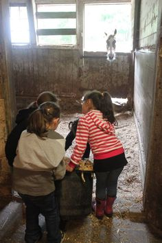 Learning & Teaching about the Environment - Horse Feed, Educational Programs, Stalls, Picnic, Groom, Environment, Management, Meet, Child