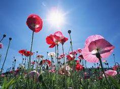 flores silvestres - Buscar con Google