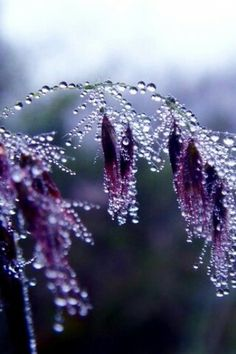 Rain and dew drops are a beautiful gift from Nature. They are cold water and warm drops at the same time. In the morning walk we normally see the dew drops […] Dew Drops, Rain Drops, Water Drops, Purple Haze, Shades Of Purple, Purple Sparkle, Plum Purple, Foto Macro, Fotografia Macro