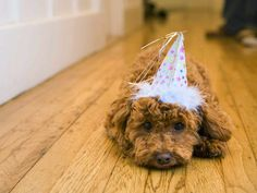 Remove All Stains.com: How to remove pet poop stains from hardwood floors