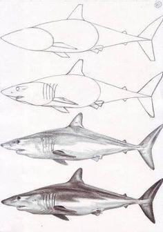 shark step by step drawing  https://www.facebook.com/veriapriyatno