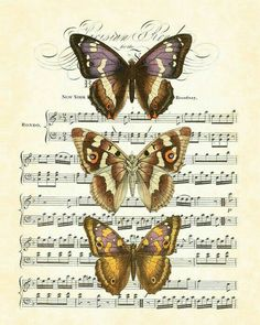 Antique Butterfly Collage Series Plate 4 1845 Art Print Home Decor Natural History Wall Hanging Decoupage Vintage, Decoupage Paper, Vintage Ephemera, Butterfly Illustration, Nature Illustration, Botanical Illustration, Butterfly Images, Vintage Butterfly, Butterfly Music