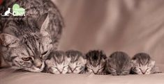 Mom cat kitten Le sevrage du chaton, une étape cruciale dans le vie du chat