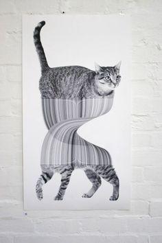 kitten drawing