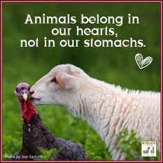 Animals belong in our hearts, not in our stomachs <3