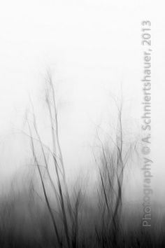 brouillard dense \|/ |