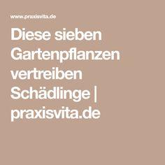 Diese sieben Gartenpflanzen vertreiben Schädlinge | praxisvita.de