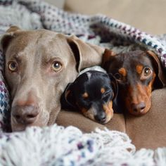 ❤️️Cutest Dogs and Puppies ~ Harlow, Indiana and Reese