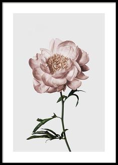 Here you will find floral prints and posters. Stylish posters with botanical prints of colorful plants. Buy botanical posters online from Desenio. Wall Prints, Poster Prints, Foto Poster, Poster Poster, Buy Posters Online, Beach Posters, Photo D Art, Colorful Plants, Botanical Prints