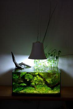 Petit aquarium sans pompe