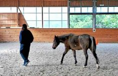Mobile Web - News - Female inmates at Chester County Prison helped by horse therapy Horse Therapy, Indoor Arena, Horse And Human, Chester County, Horse Racing, Prison, Equestrian, San Diego, Horses