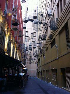 Sydney, Australia.  A sky full of birdhouses outside of a Chinese restaurant