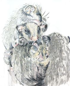 Meaghan Potter,Eastern Pygmy Possum Babies, 2017, Watercolour, Ink and Conte Charcoal on Arches 300gsm Watercolour paper, 136 x 108 cm, .M Contemporary, Art Gallery, 37 Ocean St, Woollahra, NSW, enquire at gallery@mcontemp.com