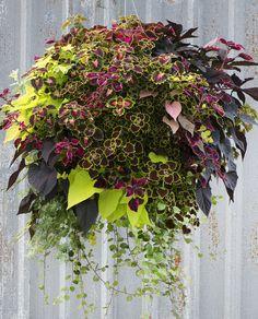 Hanging Basket Garden, Hanging Plants Outdoor, Plants For Hanging Baskets, Garden Planters, Hanging Planters, Diy Hanging, Balcony Garden, Hanging Flowering Plants, Hanging Flower Pots