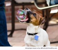 Want to eat bubbles – This dog has some fun outside. The bubbles are another way to play.