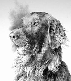'Skye' commissioned pencil portrait I did for a customer in New Hampshire Pencil Portrait, Dog Art, Pattern Art, Pet Portraits, Wildlife, Ink, Hampshire, Drawings, Dogs