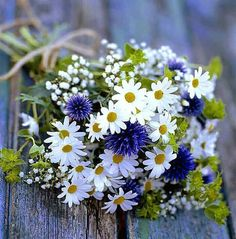 Daisies white purple flowers in bunch