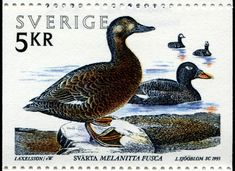 Birds Perched, Birds Flying, Birds aground - Stamp Community Forum - Page 26