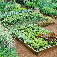 Learn exactly how to plan your first vegetable garden with this step by step guide! Discover what tools you need, how to plan your vegetable garden layout, determining the perfect spot for your garden and which vegetables grow best depending on the season Small Vegetable Gardens, Vegetable Garden Planning, Vegetable Garden For Beginners, Vegetable Garden Design, Vegetable Gardening, Veggie Gardens, Best Garden Tools, Garden Guide, Potager Garden