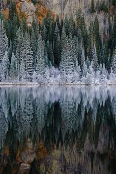 Snow on the trees, reflection on the water