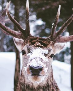 #deer #winter #deerofinstagram #snow