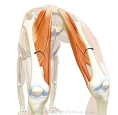 Hello Friends,   In this post we take a look at the glute max in backbends and how to avoid splaying out your knees in poses like Urdhva d...